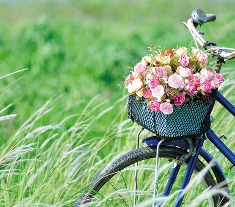 Decora la bici con plantas
