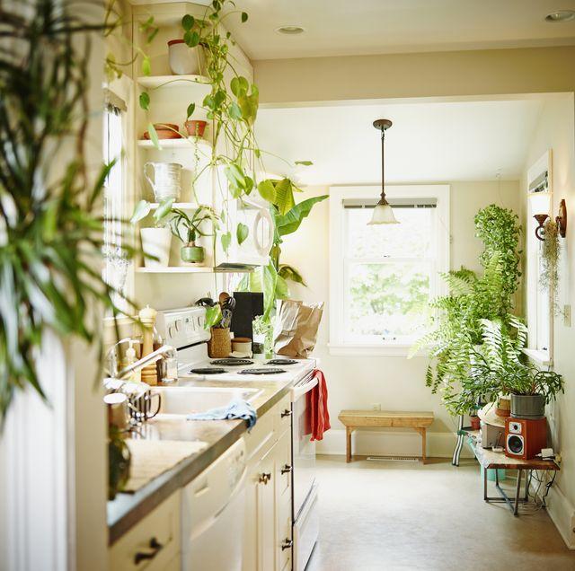 best plants for kitchen