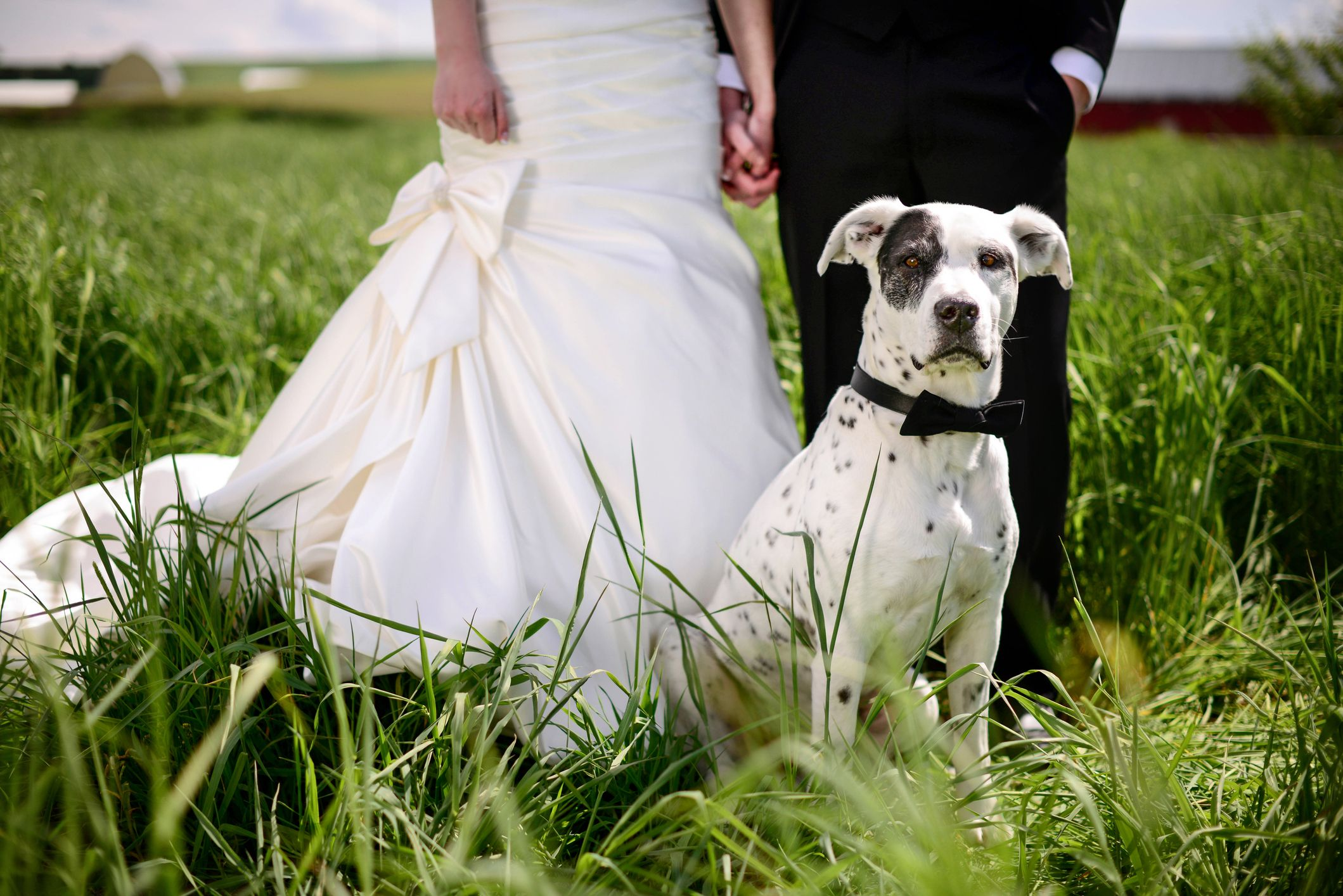 6 things to remember if your dog is coming to your wedding