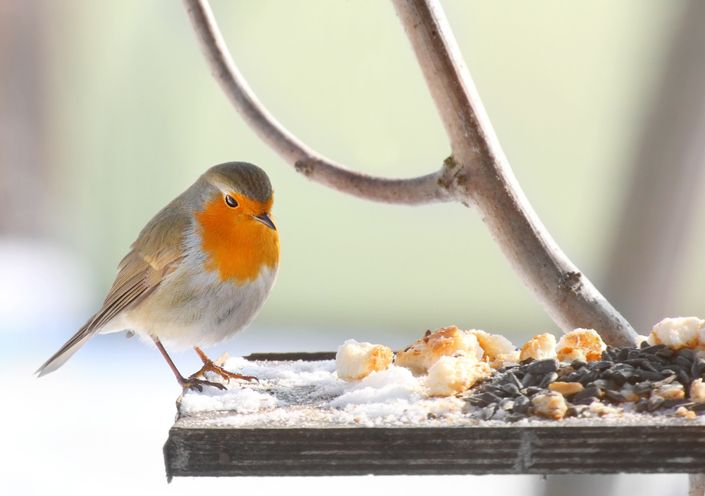 4 common Christmas leftovers that should always be given to the birds