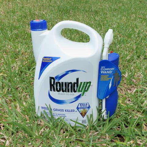 Moms Exposure To Monsanto Weed Killer >> Jury Rules Roundup S Active Ingredient Caused Couple S Cancer