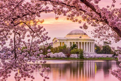 Nature, Flower, Spring, Blossom, Lilac, Tree, Natural landscape, Cherry blossom, Plant, Purple,
