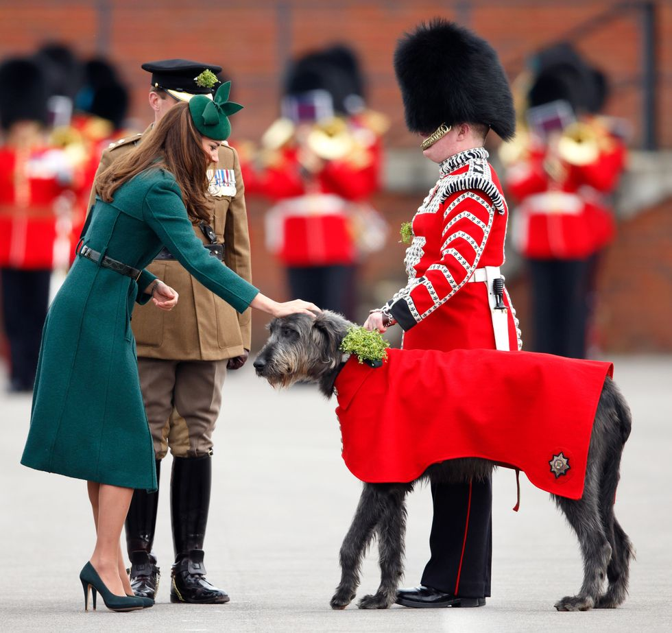 Catherine, Duchess of Cambridge, presents a Shamrock to Domhnall (The Irish Wolf Hound Regimental Mascot) as she attends the St. Patrick's Day Parade at Mons Barracks on March 17, 2014 in Aldershot, England.