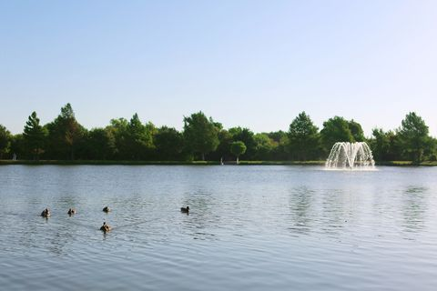 Body of water, Water, Nature, Water resources, Lake, Natural landscape, Reservoir, Pond, Duck, Daytime,