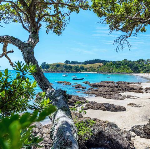 Body of water, Nature, Branch, Coastal and oceanic landforms, Natural landscape, Tree, Landscape, Shore, Bank, Watercourse,