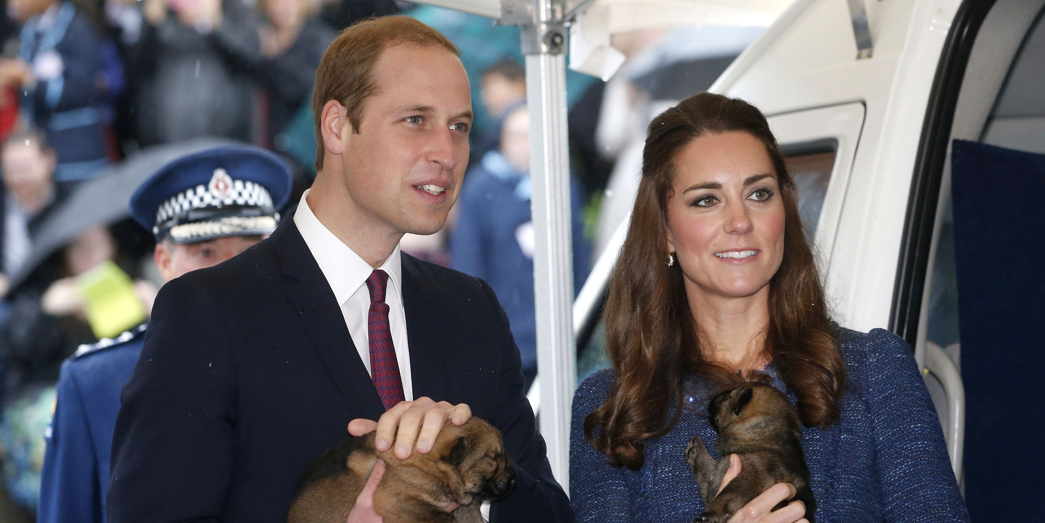 will kate dogs