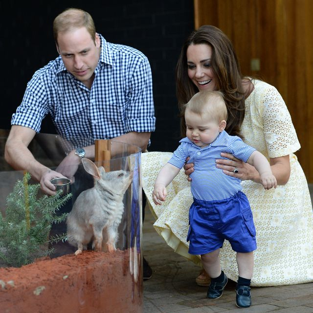 sydney, australia   april 20  no uk sales for 28 days  prince william, duke of cambridge, catherine, duchess of cambridge and prince george of cambridge meet a bilby called george as they visit the bilby enclosure at taronga zoo on april 20, 2014 in sydney, australia the duke and duchess of cambridge are on a three week tour of australia and new zealand, the first official trip overseas with their son, prince george of cambridge  photo by poolsamir husseinwireimage