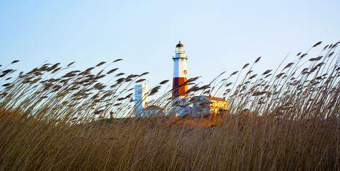 Grass family, Lighthouse, Grass, Grassland, Sky, Phragmites, Prairie, Plant, Tower, Horizon,