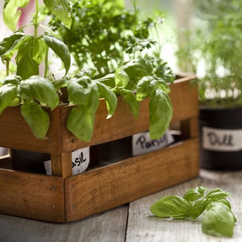 Herb Garden How To Grow Your Own Herbs
