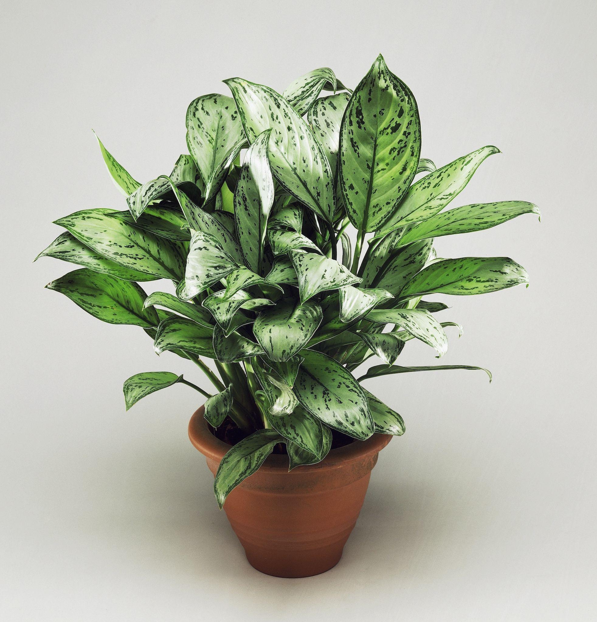 Elegant Best Indoor Plants