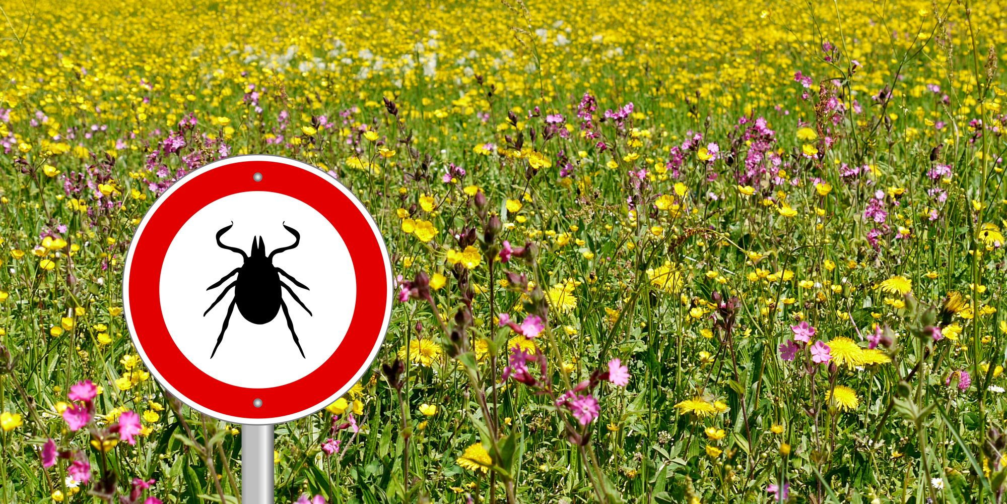 tick sign in flower meadow