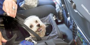 Dog in a carrier on a plane