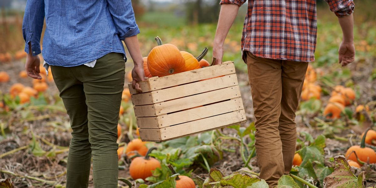 Psychologists Say These Fall Date Ideas Will Actually Help Your Bond
