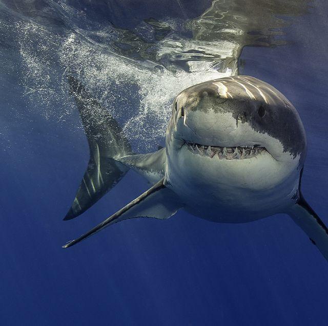5 cosas que no debes hacer si te cruzas con un tiburón