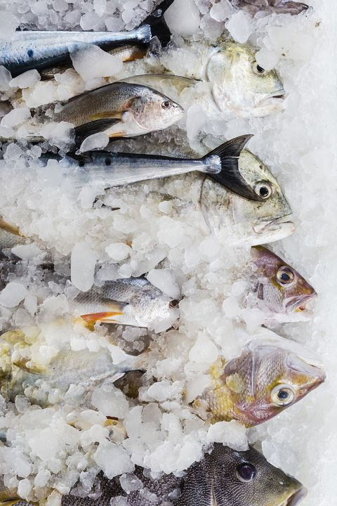 Close up of fresh fish for sale at market
