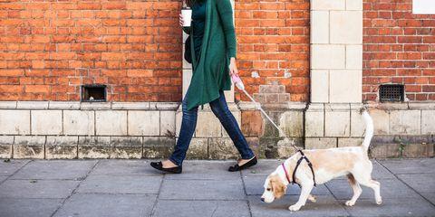 Photograph, Street fashion, Dog, Snapshot, Canidae, Leash, Companion dog, Fashion, Wall, Dog walking,