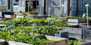 Urban farming - Is urban farming het boerenleven van de toekomst?