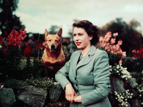 Photograph, Canidae, Dog, Smile, Companion dog, Dog breed, Photography, Carnivore, Happy, Plant,