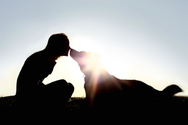 a silhouette of a happy young woman is sitting outside at sunset lovingly kissing her large german shepherd mix breed dog