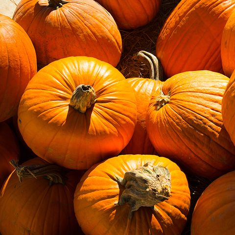 5 Ways Your Pumpkin Spice Addiction Can Actually Help You