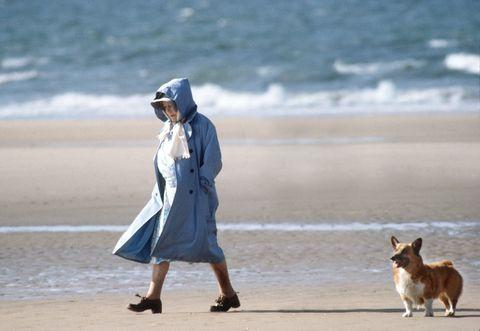 Canidae, Dog, Dog walking, Walking, Vacation, Human, Companion dog, Beach, Dog breed, Carnivore,