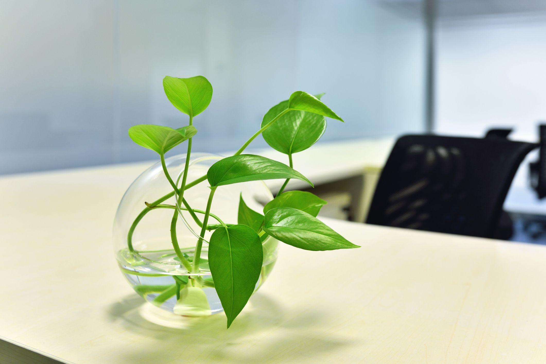 Le piante perfette per chi non ha il pollice verde