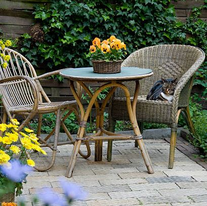 15 Best Patio Plants Outdoor, What Plants Are Good For Patio Planters