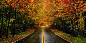 fall leaves highway