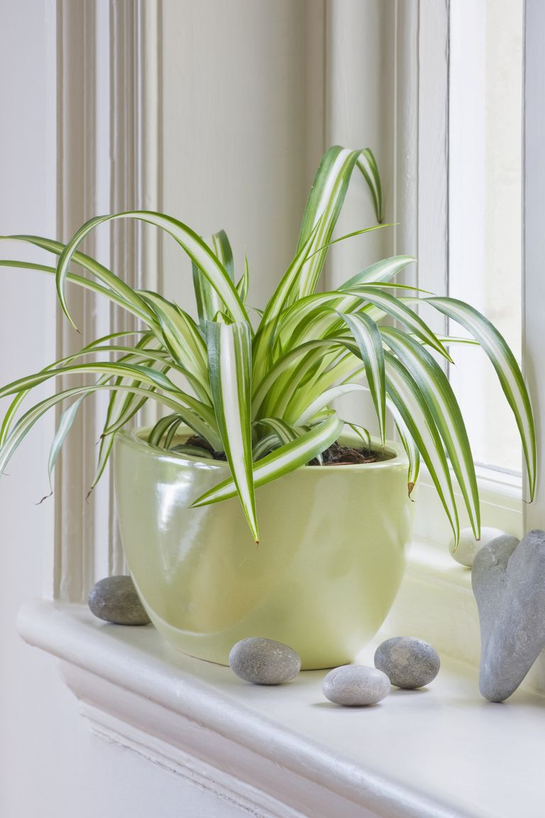 13 Houseplants That Can Survive Low Light - Best Indoor ...