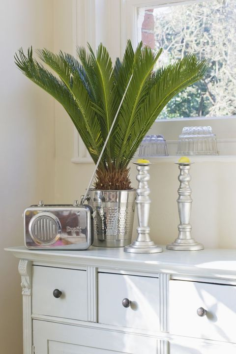 White, Houseplant, Room, Leaf, Plant, Furniture, Flowerpot, Tree, Table, Home,
