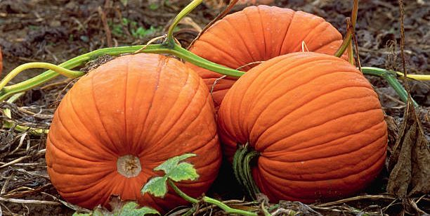 How to Keep Pumpkins From Rotting and Ruining Everything You Love About Fall