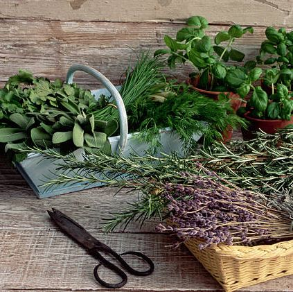 baskets of lavender, sage, chives, dill, and other herbs stand beside potted basil plants