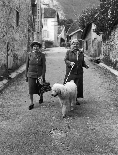 Photograph, White, Black, Dog, Black-and-white, Canidae, Snapshot, Monochrome, Street, Monochrome photography,