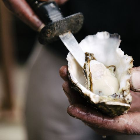 oysters high protein