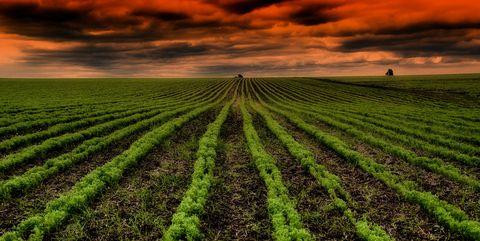 Field, Crop, Agriculture, Sky, Cash crop, Green, Plantation, Farm, Soil, Plant,