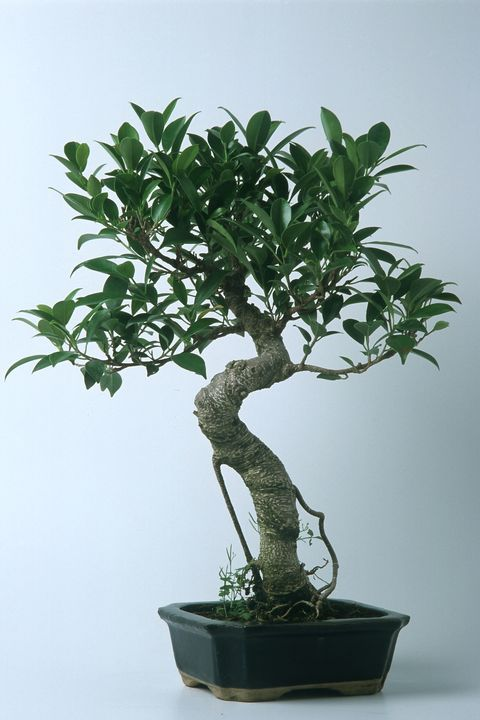 30 Best Indoor Plants For Apartments Best Houseplants For Apartment Dwellers
