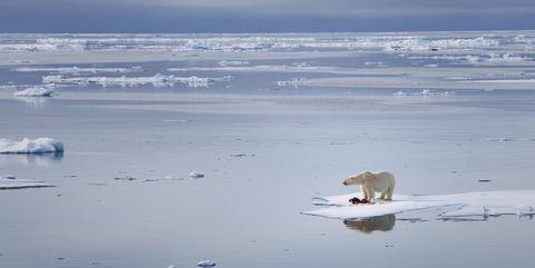 Arctic, Ocean, Ice, Sea ice, Natural environment, Arctic ocean, Sky, Water, Sea, Ice cap,