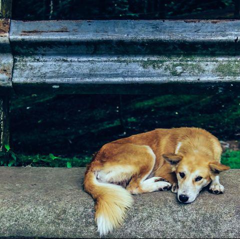 Cute Dog Lying On Roadside