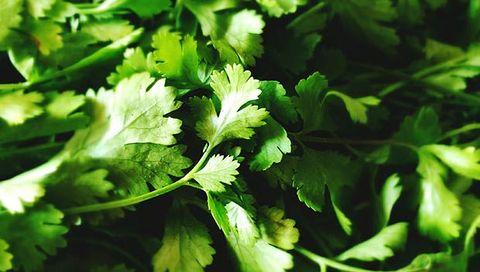 cilantro for skin