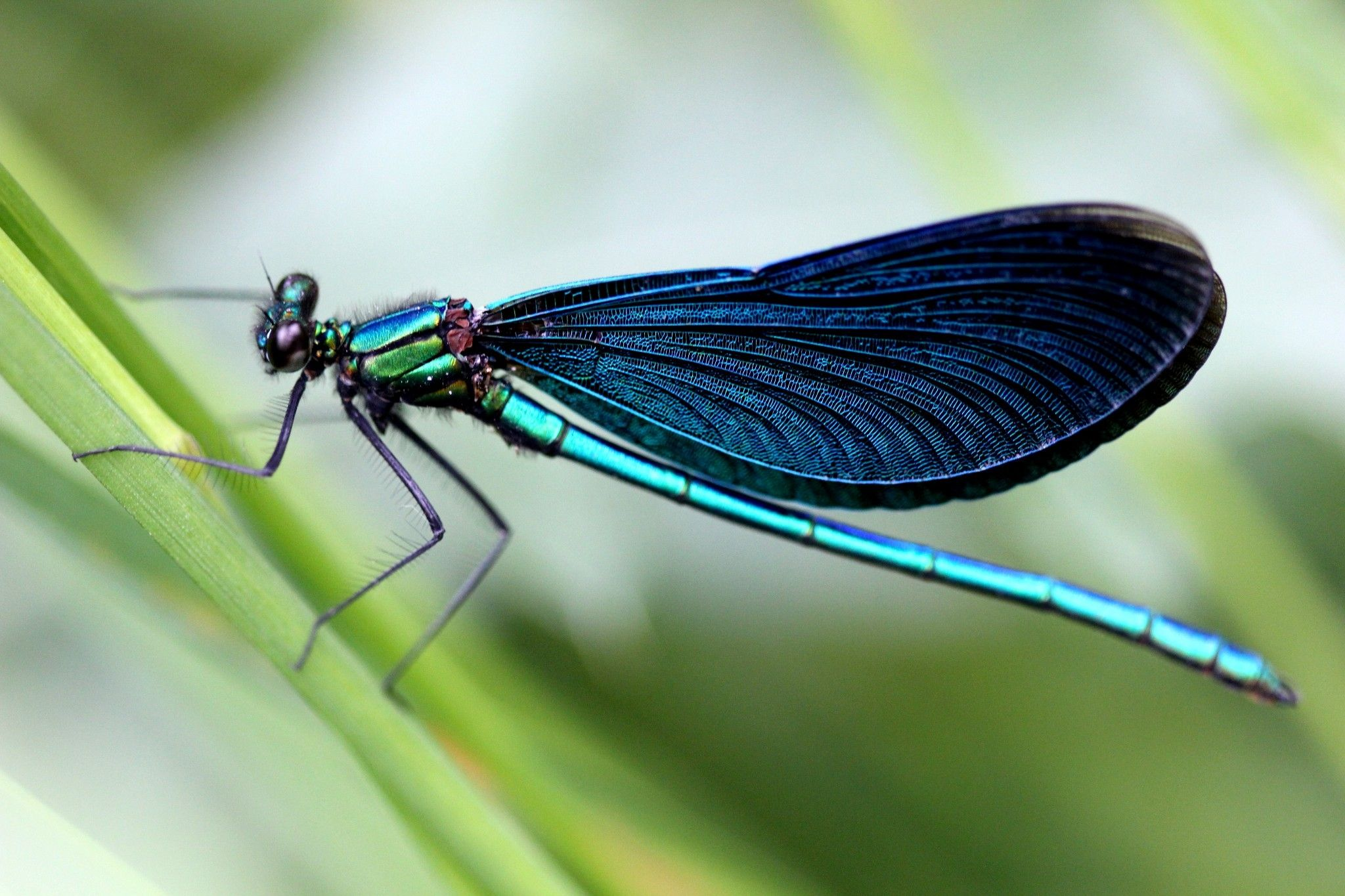Dragonflies Can Eliminate Mosquitoes in Your Yard — Here's What to Plant to Attract Them