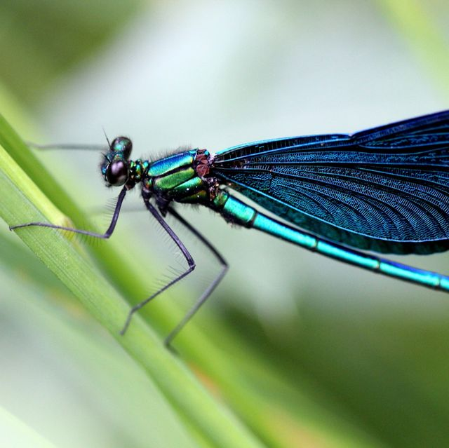 Insect, Dragonfly, Damselfly, Invertebrate, Dragonflies and damseflies, Net-winged insects, Macro photography, Pest, Close-up, Arthropod,