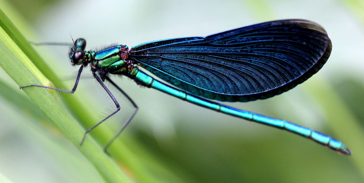 Your Planting Guide to Attract Dragonflies and Eliminate Mosquitoes