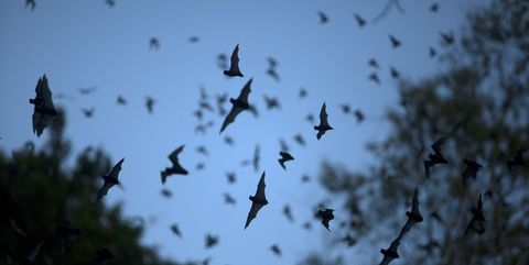 How to Attract Bats to Your Yard - How to Make a Bat Box How To Add A Bat Bathroom on