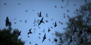 Bats leave a cave