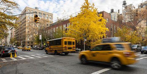 Vehicle, Motor vehicle, Yellow, Transport, Tree, Car, Mode of transport, Town, Street, Leaf,