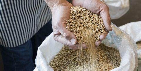 Malt, Food, Grain, Hand, Plant,