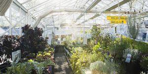 Op deze dag krijg je gratis planten van Intratuin