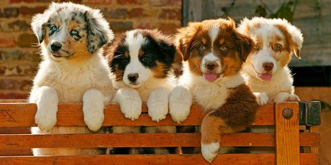 These Are The Smartest Dog Breeds