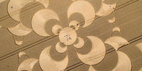 Circle, Illustration, Plant,