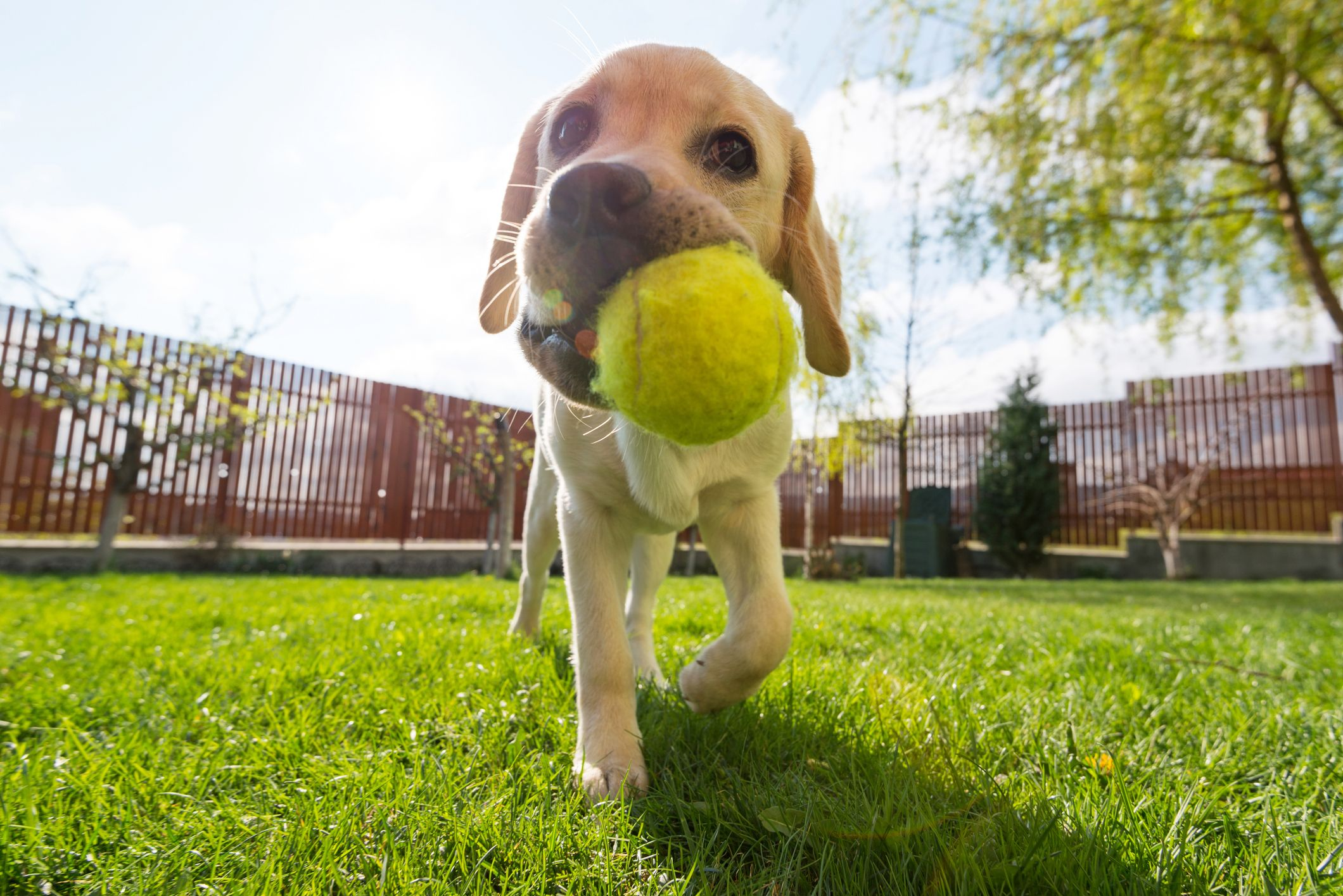 This Smart Ball Lets Your Pet Play Fetch With Themselves When You're Not Home